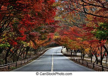 Camino de follaje de otoño