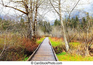 Camino de madera y árboles de abedul temprano paisaje primaveral.