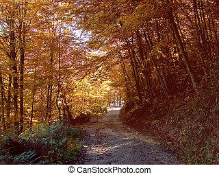 Camino de otoño