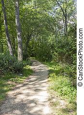 Camino de tierra a través de un bosque