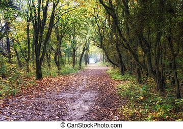 Camino del bosque soñado
