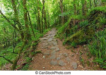 Camino en bosque verde