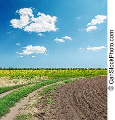 Camino en campos de agricultura bajo el cielo azul con nubes