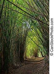 Camino en el bosque de bambú