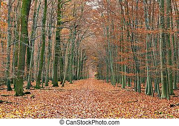 Camino en el bosque de otoño