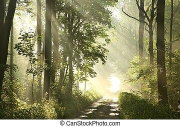 Camino en el bosque de primavera al amanecer