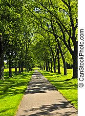 Camino en parque verde