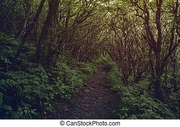 Camino oscuro en el bosque.