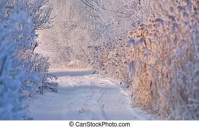 Camino rural de invierno cubierto de nieve