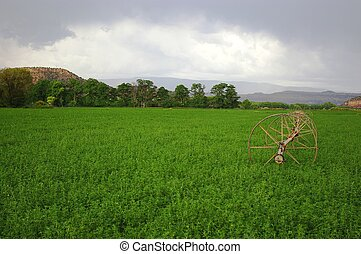 Campo Alfalfa