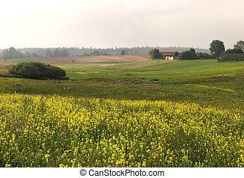 Campo amarillo