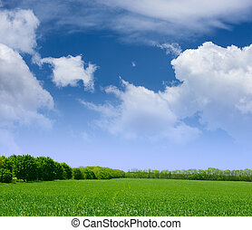 Campo amplio de hierba verde, bosque y cielo azul con nubes