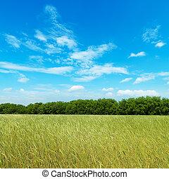 Campo con cebada verde bajo el cielo nublado