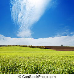 Campo con hierba verde bajo el cielo nublado