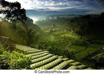 Campo de agricultura