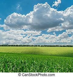 Campo de agricultura verde bajo el cielo nublado