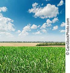 Campo de agricultura verde y cielo azul nublado