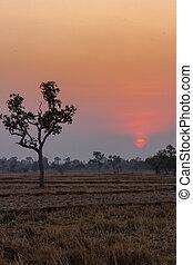 Campo de arroz durante el atardecer con un cielo colorido en verano