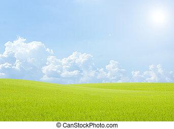 Campo de arroz verde pasto azul cielo nublado fondo