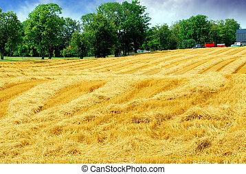 Campo de cosecha