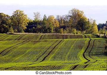Campo de cultivo de invierno
