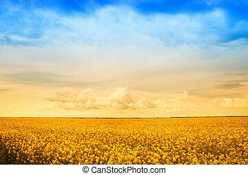 Campo de flores de oro de violación