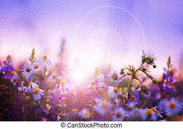 Campo de flores primavera