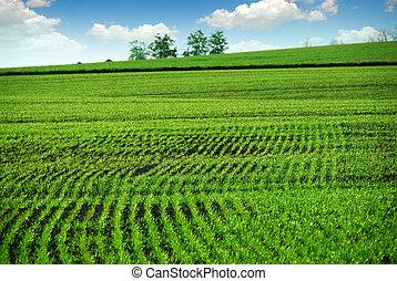 Campo de granja verde
