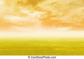 Campo de hierba con cielo al atardecer