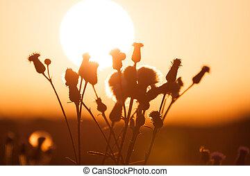 Campo de hierba durante el atardecer de verano