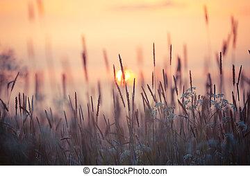 Campo de hierba durante el atardecer