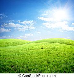 Campo de hierba fresca