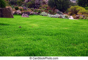 Campo de hierbas