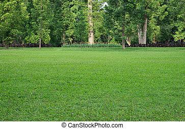 Campo de hierbas y árboles