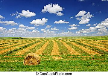 campo de la granja, cosecha de trigo