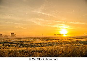 Campo de maíz al amanecer con nubes oscuras