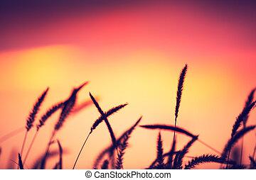 Campo de ocaso, hermoso color vibrante
