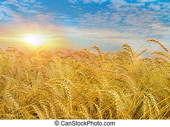 Campo de trigo al amanecer