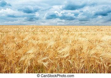 Campo de trigo dorado con dramáticas nubes de tormenta