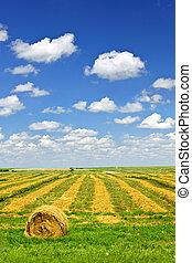 Campo de trigo en la cosecha