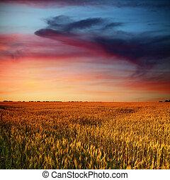 Campo de trigo y nubes de belleza en el atardecer