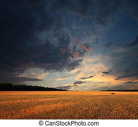 Campo de trigo y nubes de sol