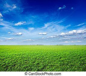 Campo de verde hierba fresca bajo el cielo azul