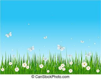 campo, herboso, mariposas