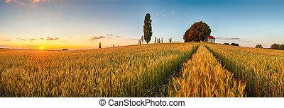 Campo panorámico de verano campo de trigo, agricultura