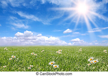 campo, primavera, soleado, sereno, pradera