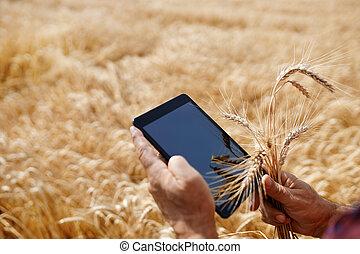 campo, trigo, manos, tableta, granjero