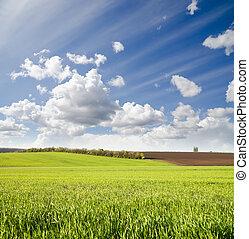 Campo verde agrícola bajo el cielo nublado