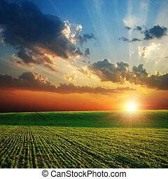 Campo verde agrícola y atardecer