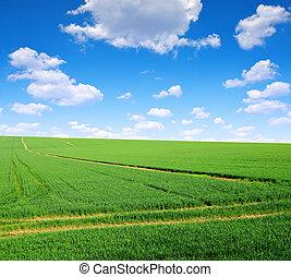 Campo verde con cielo azul.